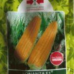 jual benih jagung manis bonanza