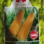 jual-benih-jagung-manis-bonanza-202x300