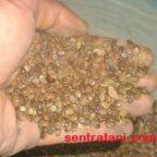 jual-benih-sengon-merah-300x300-144x144