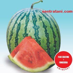 jual bibit semangka