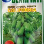 jual-bibit-pepaya-california-144x144