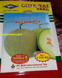 bibit-melon-action