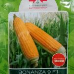 jual-benih-jagung-manis-bonanza9-f1