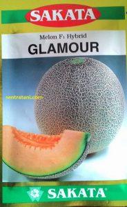 benih melon glamour