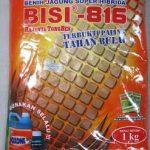 jagung-bisi-816