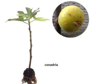 jual pohon tin