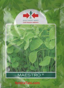 bayam hijau maestro