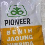 Benih Jagung Pioneer P21