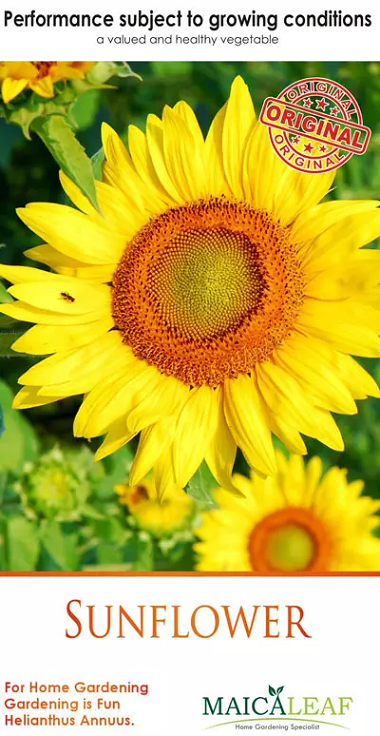 Jual Bibit Bunga Matahari