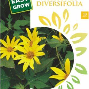 Benih Herbal Insulin Maica Leaf 10 Biji