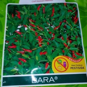 Cabe Rawit Bara 3.200s