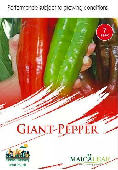Cabe GIANT PEPPER Maicaleaf 7s