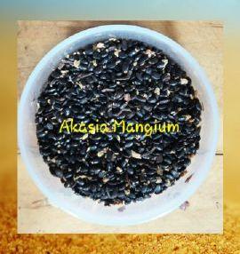 Akasia Mangium 100g