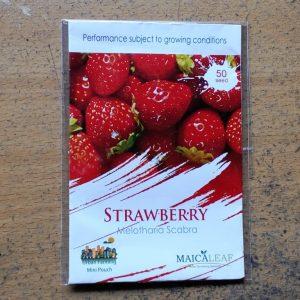 Strawberry Maicaleaf 50s