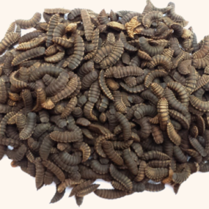 Bibit / Pupa BSF - Black Soldier Fly - Lalat Tentara Hitam (500 gr)