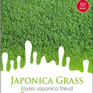 Bibit Rumput Jepang - Maica Leaf Zoysia Japonica 50s