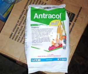 Fungisida Antracol 70wp 500 g