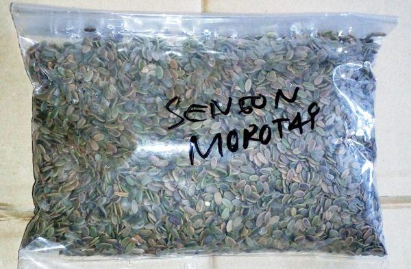 Sengon Morotai 1kg