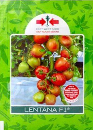 Tomat Lentana F1 1.750s
