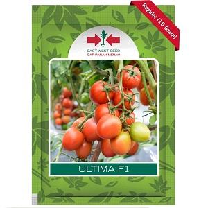 Benih Tomat Ultima F1 10 Gram