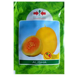 Benih Melon Golden Tahan Virus Alisha f1