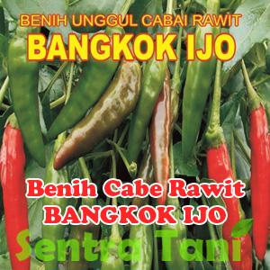 Benih Cabe Rawit bangkok ijo