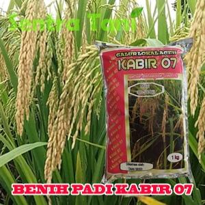 Benih Padi Kabir 07