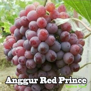 Anggur Red Prince