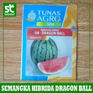 Benih Semangka Hibrida F1 Dragon Ball