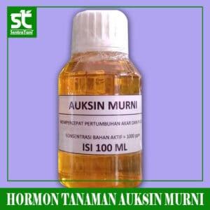HORMON AUKSIN
