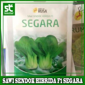 Benih Sawi Sendok Hibrida F1 SEGARA