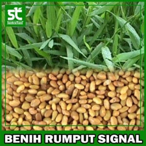 Benih Rumput Signal 1 Kg