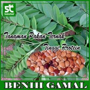 Benih Gamal 1 Kg