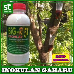 INOKULAN GAHARU BIG-R 51 100 GRAM